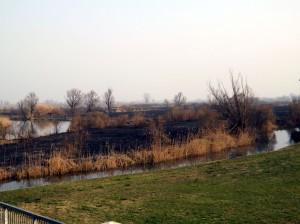 Rivalta, la Valle bruciata il giorno dopo 1