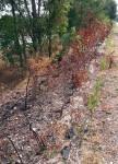 incendio-corridoio-ecologico-2