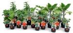 piante_miste